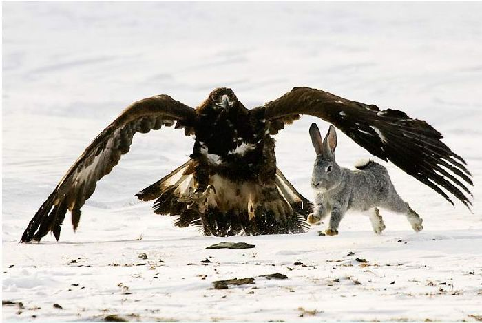 Hunting with falcons in Kazakhstan, Russia 5