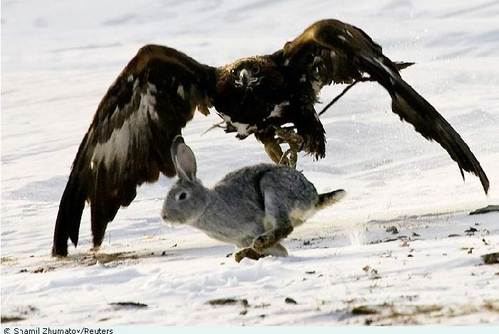 Hunting with falcons in Kazakhstan, Russia 6