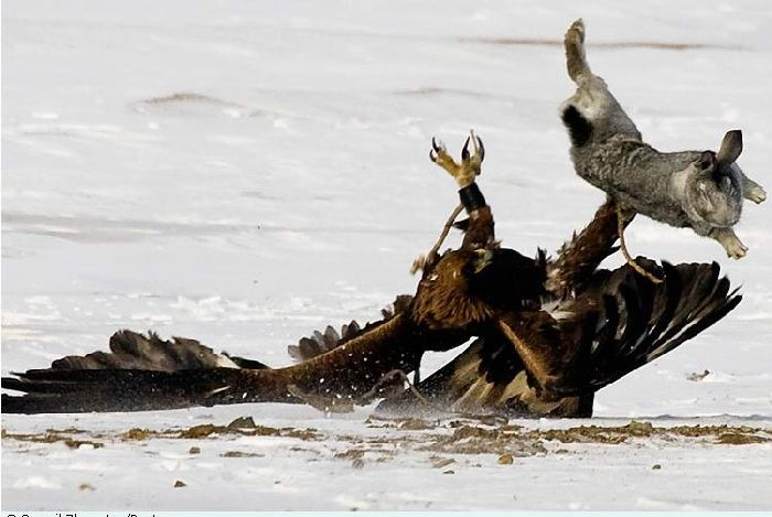 Hunting with falcons in Kazakhstan, Russia 7