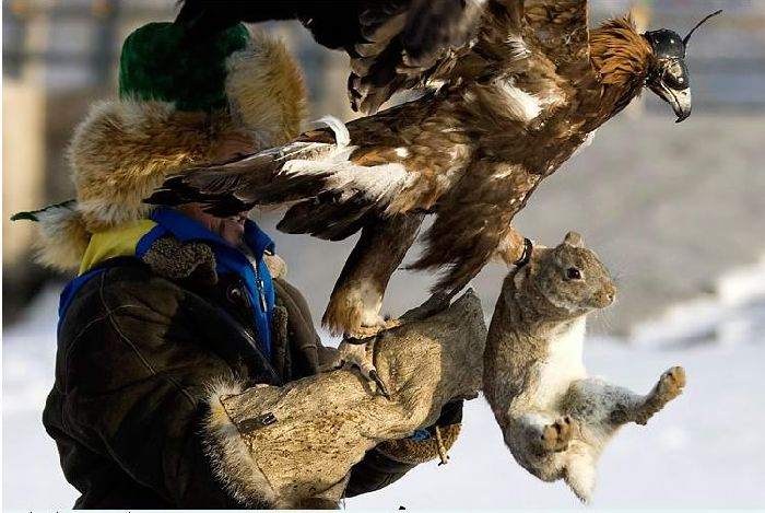 Hunting with falcons in Kazakhstan, Russia 9
