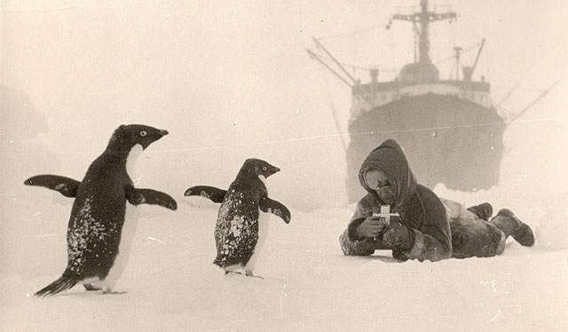 first Russian expedition to Antarctics in 1950 1