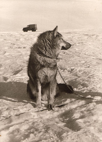 first Russian expedition to Antarctics in 1950 30