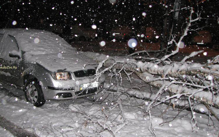a tree felt down near the car in Russia 1