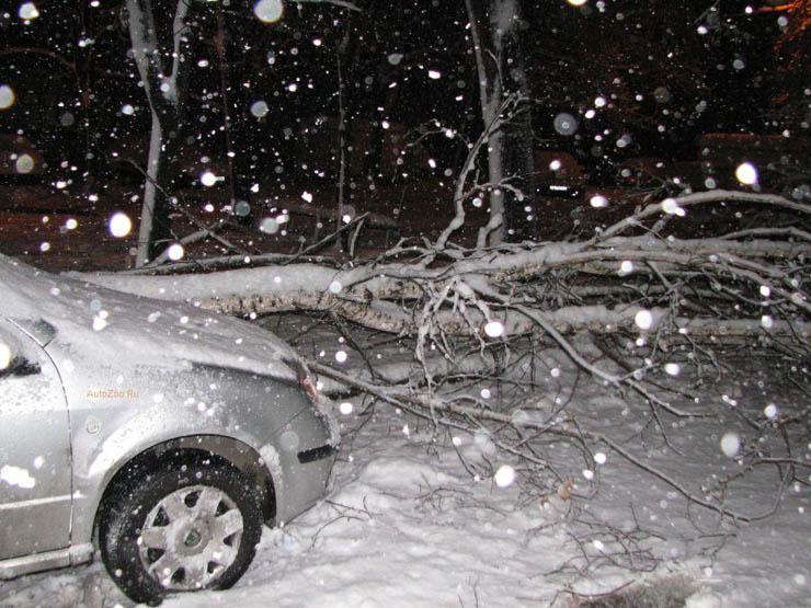 a tree felt down near the car in Russia 2