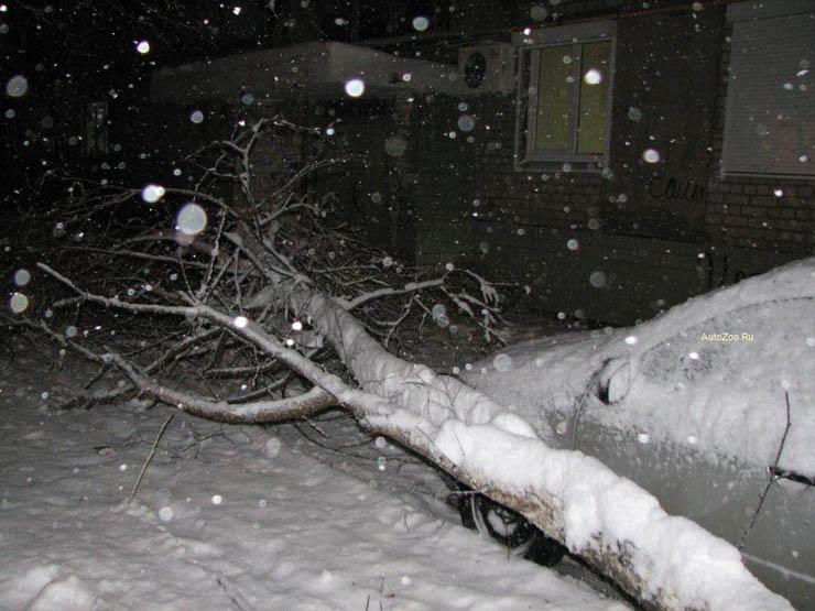 a tree felt down near the car in Russia 3