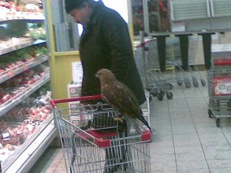 Russian strange eagle pets