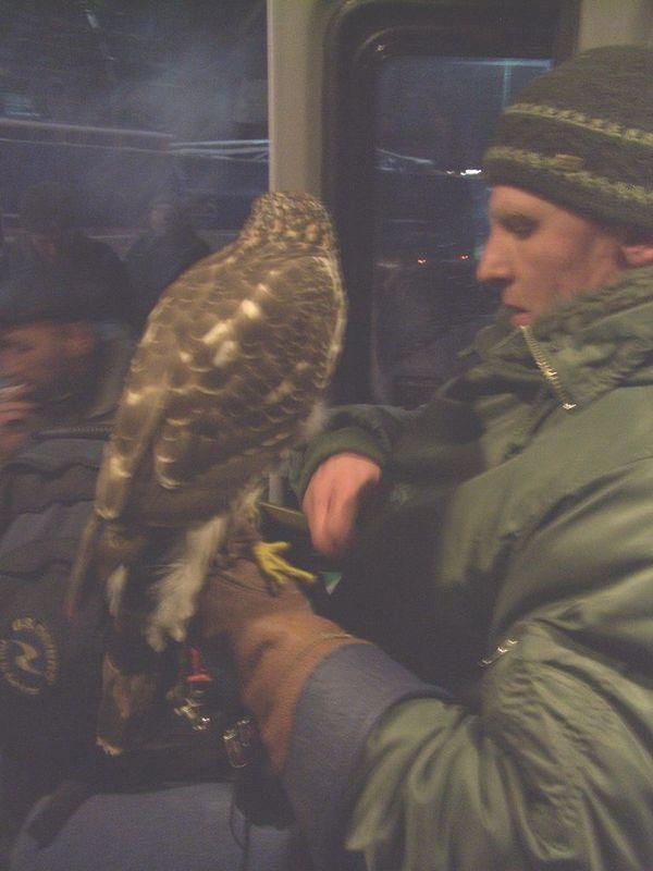 Russian strange eagle pets 2