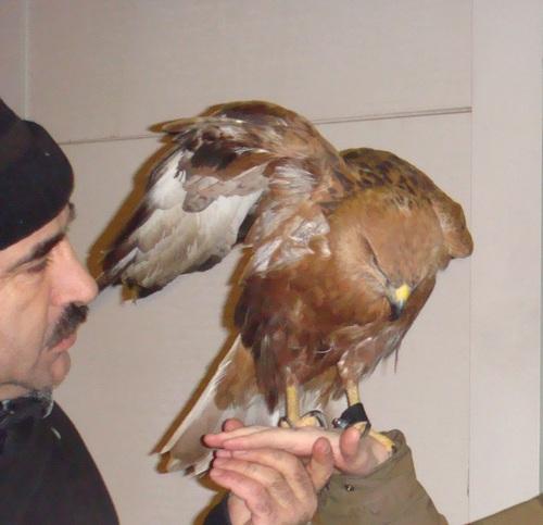 Russian strange eagle pets 3