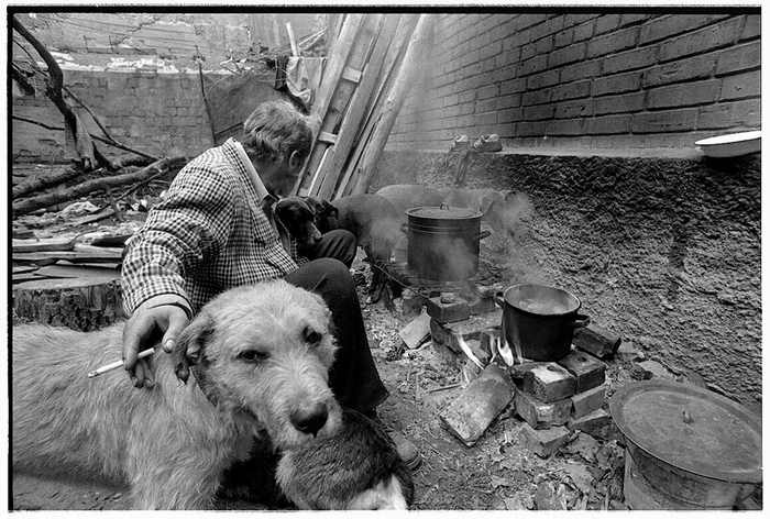 homeless lady from Kiev with a lot of dogs 13