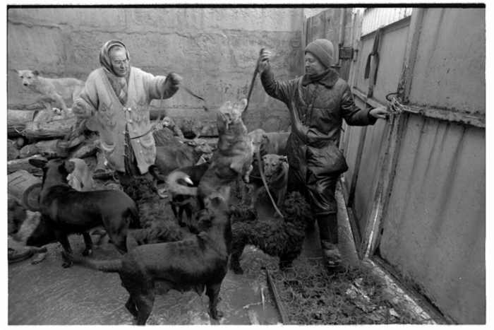 homeless lady from Kiev with a lot of dogs 16