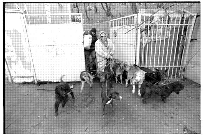homeless lady from Kiev with a lot of dogs 17