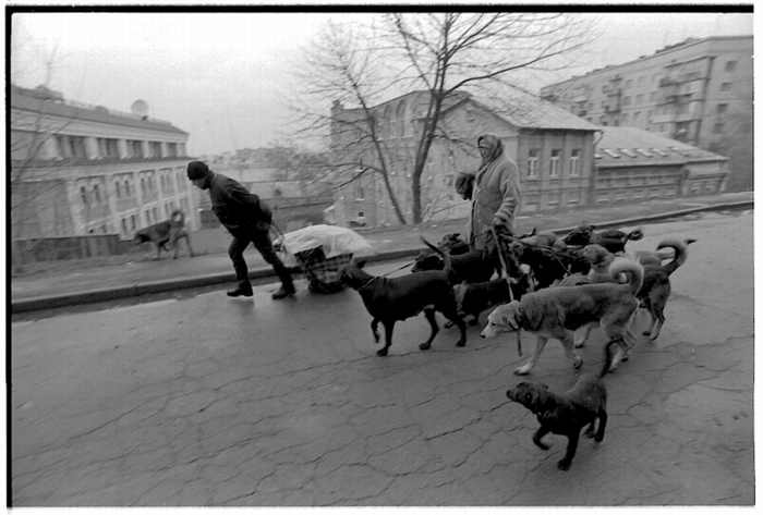 homeless lady from Kiev with a lot of dogs 18