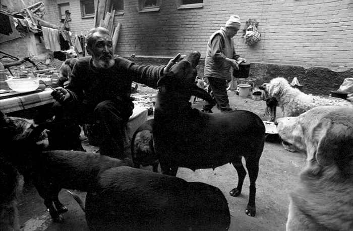 homeless lady from Kiev with a lot of dogs 23