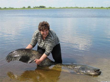 Huge Catfish Caught in Pripyat