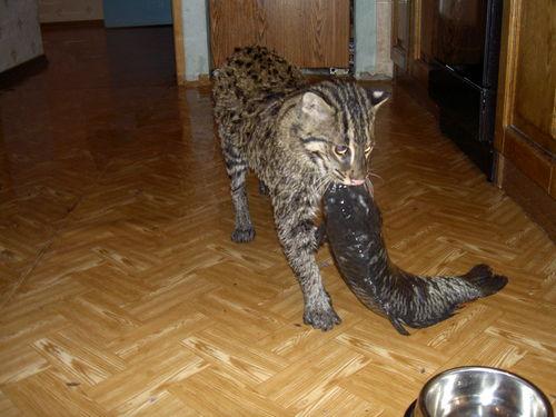 Russian pet 15