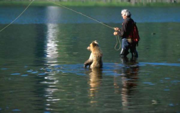 russian bears 1