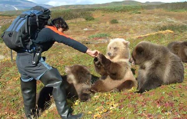 russian bears 2