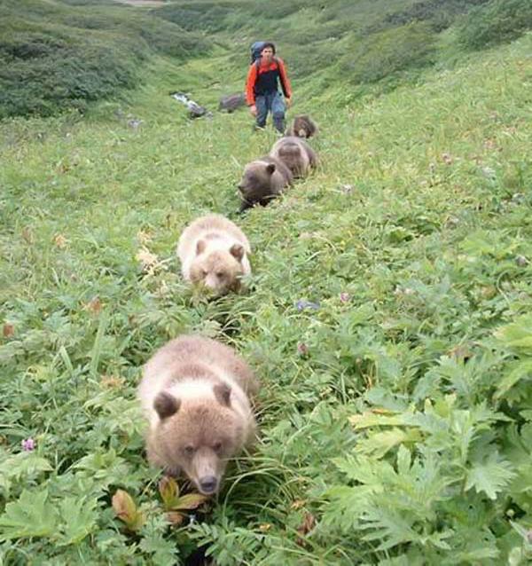 russian bears 3