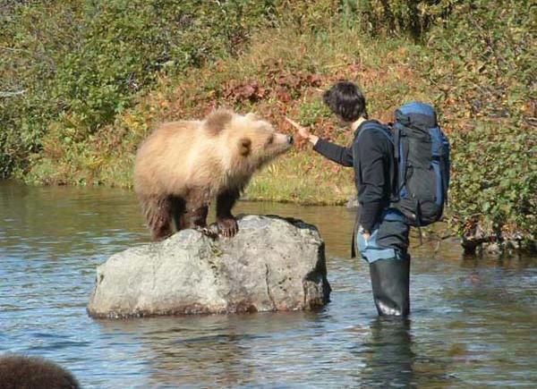 russian bears 5