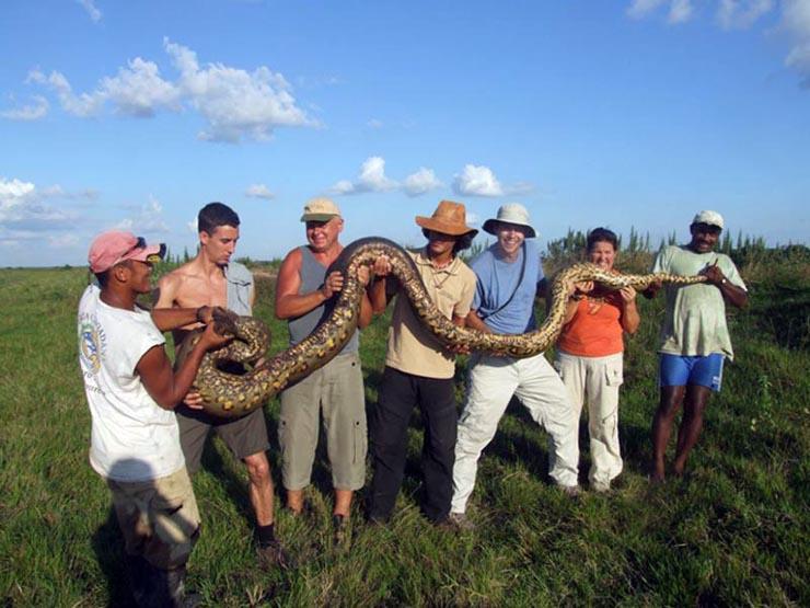 giant snake in Kazakhstan  2