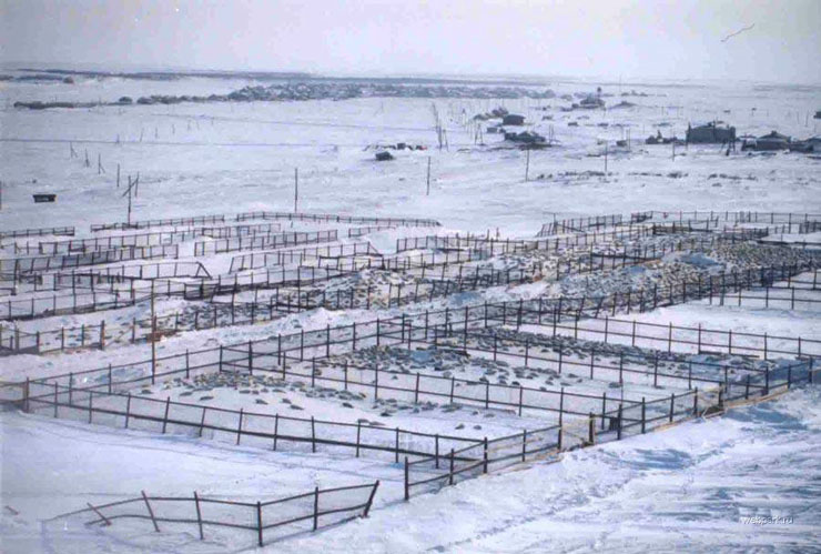 Seals clubbed in Russia 5