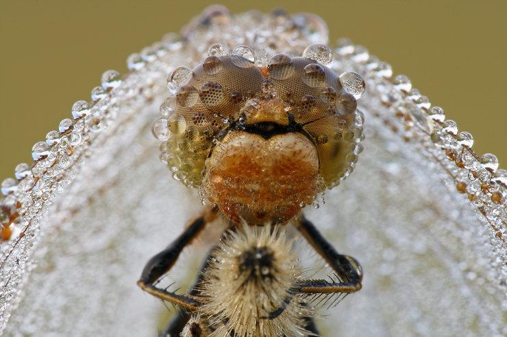 macro graphs of insects by Tatiana Zarubo 1
