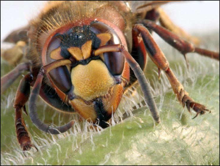 macro graphs of insects by Tatiana Zarubo 10