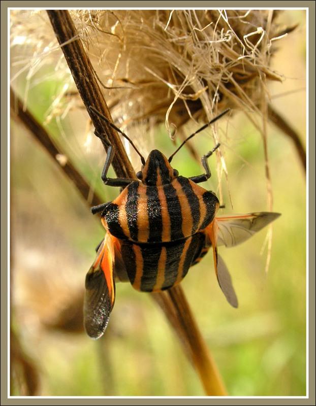 macro graphs of insects by Tatiana Zarubo 2