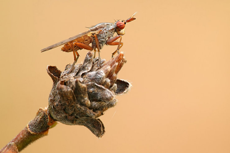 macro graphs of insects by Tatiana Zarubo 45