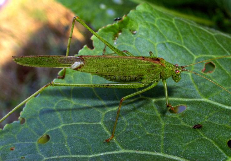 macro graphs of insects by Tatiana Zarubo 7