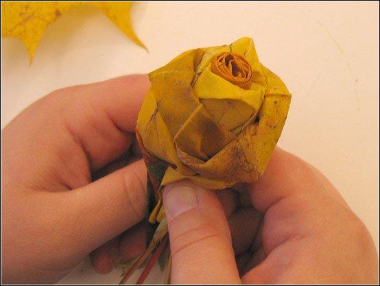 Mapple roses 11