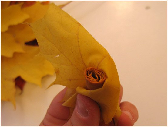 Maple roses 7
