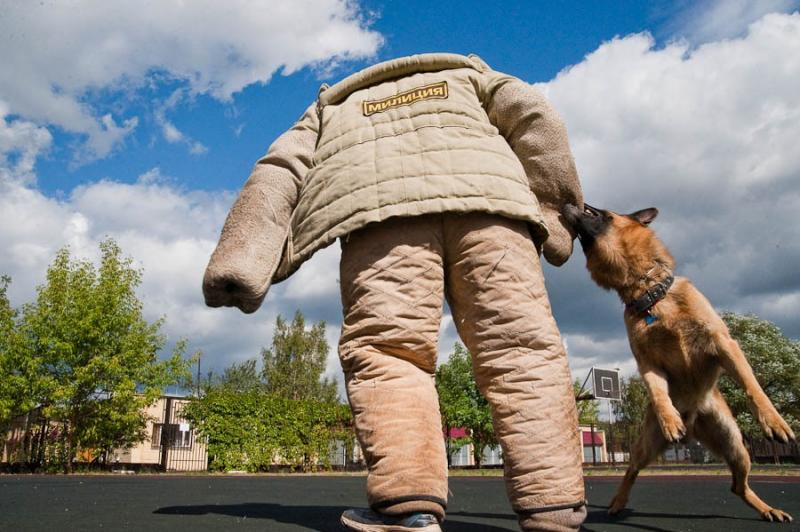 Military Working Dogs 1