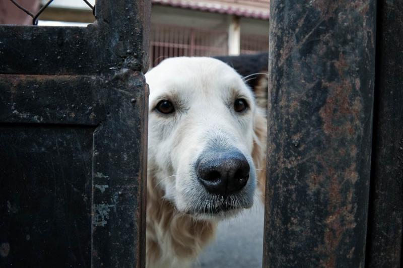 de Cachorros, La vida de los Perros Policia
