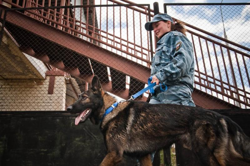 Military Working Dogs 2