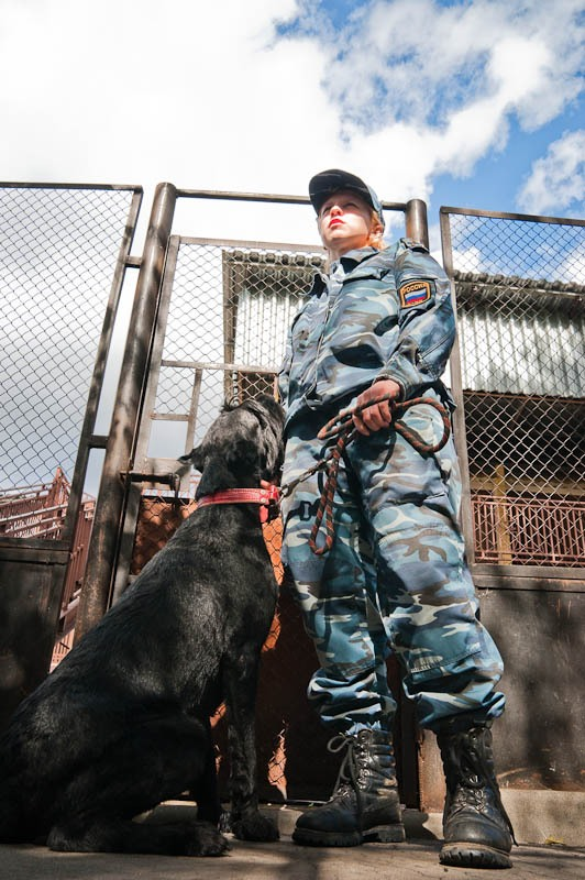 Military Working Dogs 7