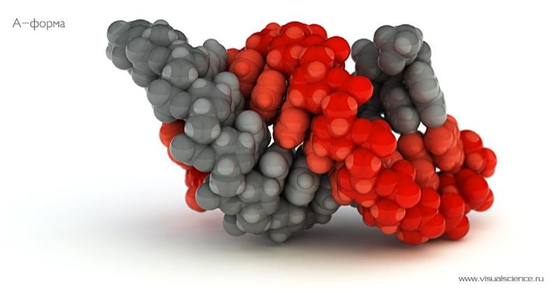 Russian molecular models 4