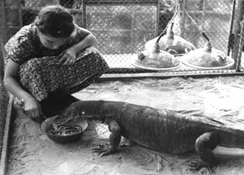 Moscow zoo back at 1920 1