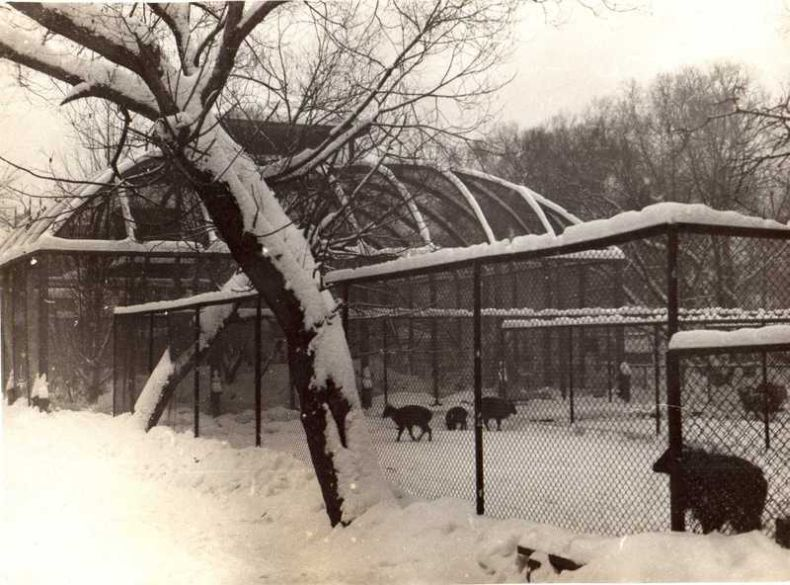 Moscow zoo back at 1920 20