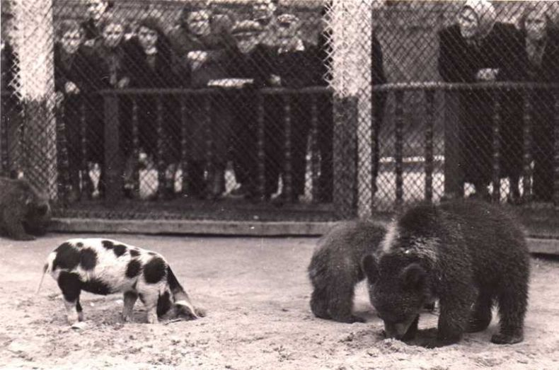 Moscow zoo back at 1920 3