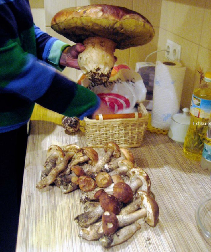 strange looking Russian mushrooms 3