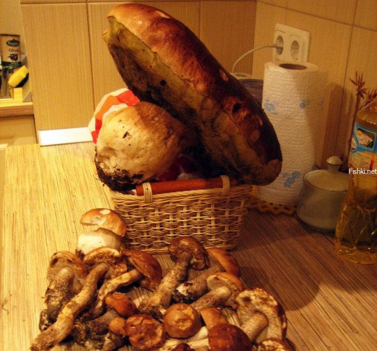 strange looking Russian mushrooms 4