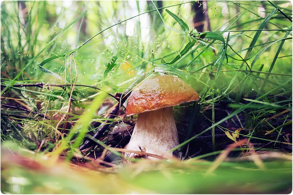 Mushrooms_in_Russia 32