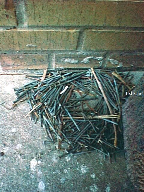 a nest made from nails 1