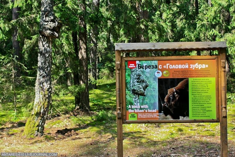Belovezhskaya Pushcha - A Global Scientific Ecological Centre