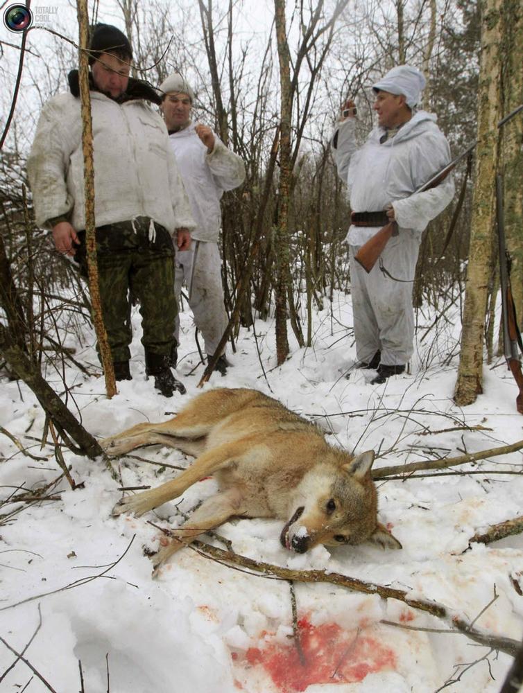 Wolf Hunting In Chernobyl