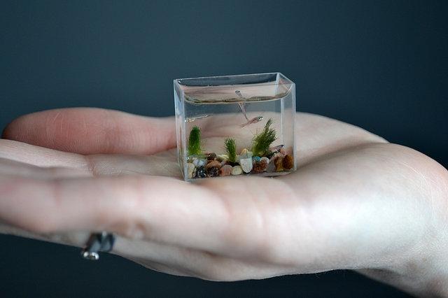 World's Smallest Aquarium With Fish