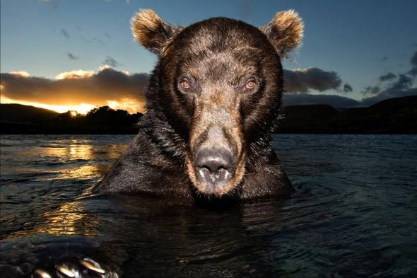 Man Who Spoke With Bears