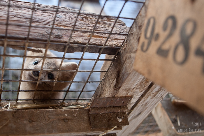 Fur Disaster Near Moscow