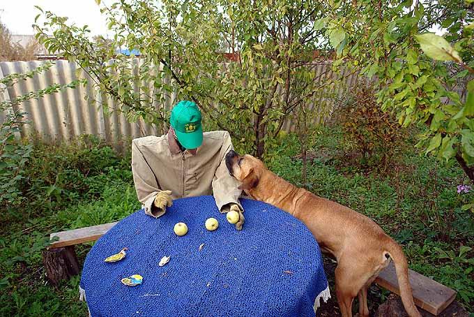 strange scarecrow in Russian garden 2